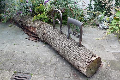 Droog Design Tree Trunk Bench