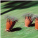 Santavase Outdoor Pot